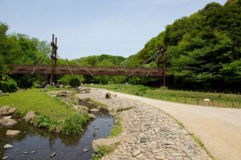 緑のかけ橋