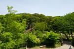 展望デッキから泉の森を望む
