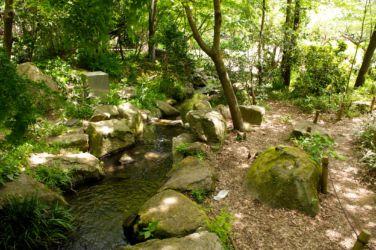 泉の森 遊びの小川